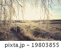 Winter landscape with birch branches 19803855