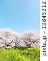 日本の春の風景 19845212