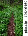 ニリンソウ 山野草 小道の写真 19846460