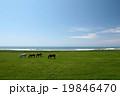 海沿いの放牧場 19846470