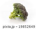 ブロッコリー 野菜 緑黄色野菜の写真 19852649