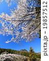 桜咲く宇都宮森林公園と古賀志山 19857512