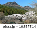 宇都宮・森林公園の桜と古賀志山 19857514