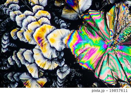 クエン酸の結晶の顕微鏡写真 19857611