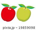 リンゴ 青リンゴ 果物のイラスト 19859098