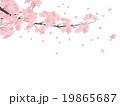 桜 花 ソメイヨシノのイラスト 19865687