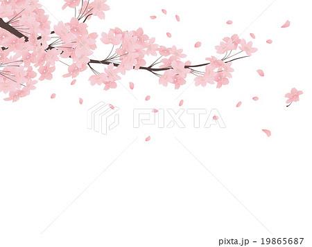 ソメイヨシノ 19865687