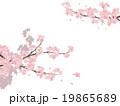 桜 花 ソメイヨシノのイラスト 19865689