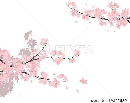 ソメイヨシノ 19865689