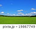 夏の青空と広大な田んぼ風景 19867749