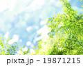 新緑 若葉 春の写真 19871215