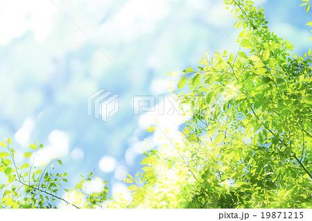 春のイメージ_若葉、新緑 19871215