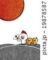 ニワトリとヒヨコ 19878587