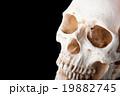 頭蓋骨,黒背景 19882745