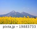 菜の花と磐梯山 19883733