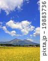 菜の花と磐梯山 19883736