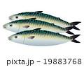 鯖 魚 魚類のイラスト 19883768