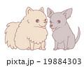 なかよしわんちゃん5 19884303