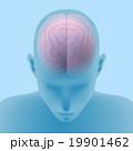 脳 構造 内部のイラスト 19901462