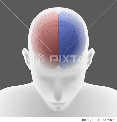 人間の左脳と右脳 イラスト 19901467