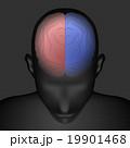 脳 構造 ベクターのイラスト 19901468
