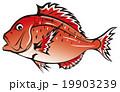 魚 鯛 食べ物のイラスト 19903239