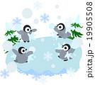 みんなで楽しく雪合戦で遊ぶ赤ちゃんペンギン 19905508