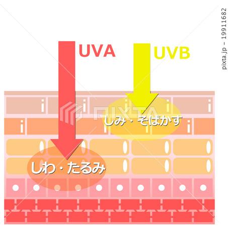 紫外線と肌 19911682