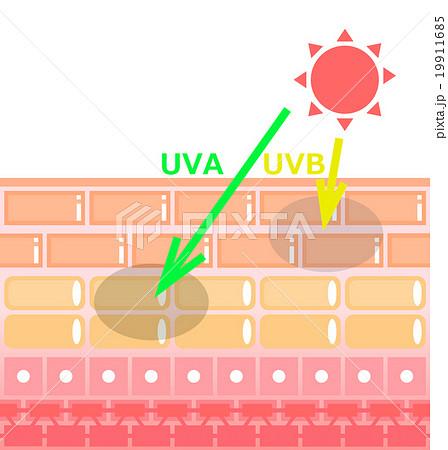 紫外線と肌 19911685