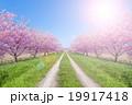 桜 風景 道の写真 19917418
