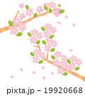 春 桜 ベクターのイラスト 19920668