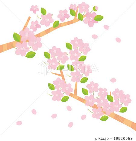桜の枝二本 19920668