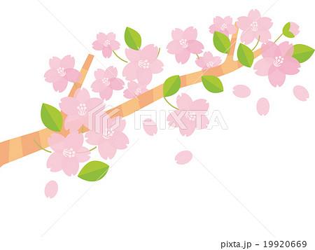 桜の枝B 19920669