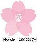 桜の花 19920670