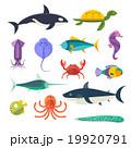 サカナ 魚 魚類のイラスト 19920791