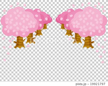 桜並木バリエーション左右 19921797