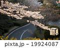 桜と道路 19924087