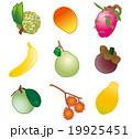 トロピカルフルーツ フルーツ 果物のイラスト 19925451