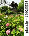 横浜・都筑区 正覚寺の花菖蒲 19925536