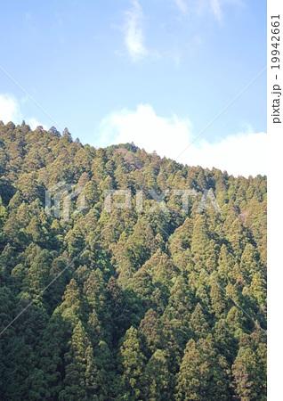 杉檜林(紀伊山地) 19942661