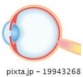 目 断面図 構造のイラスト 19943268