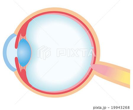 目の構造 断面図 19943268