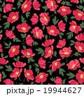 花 ポピー 花柄のイラスト 19944627