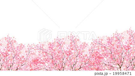 桜 春 花 背景  19958471