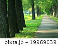 草 テクスチャー グリーンの写真 19969039