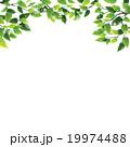 木漏れ日 葉 植物のイラスト 19974488