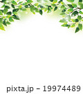 木漏れ日 葉 植物のイラスト 19974489