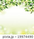 木漏れ日 葉 植物のイラスト 19974490