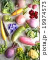 根菜 カラフル 野菜の写真 19974573