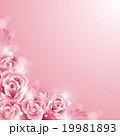 薔薇背景 19981893